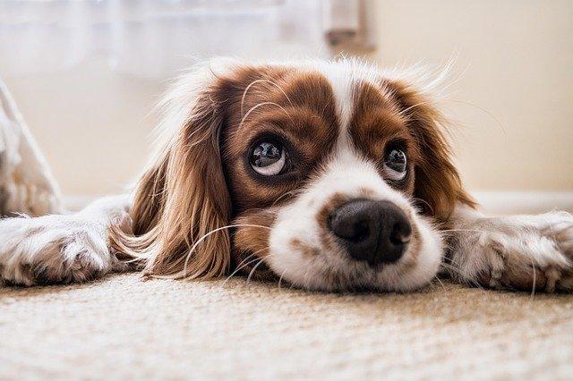Dog sad waiting